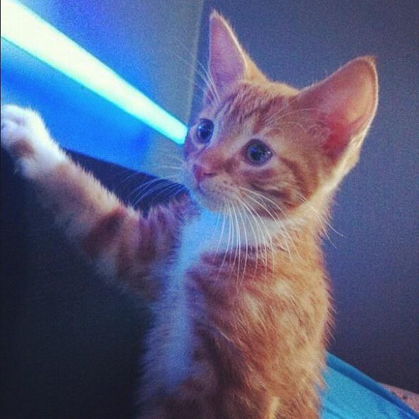 cat clawing furniture