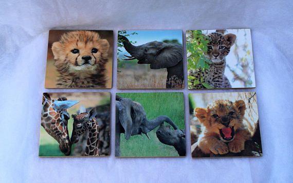 Baby Animal Coaster Set
