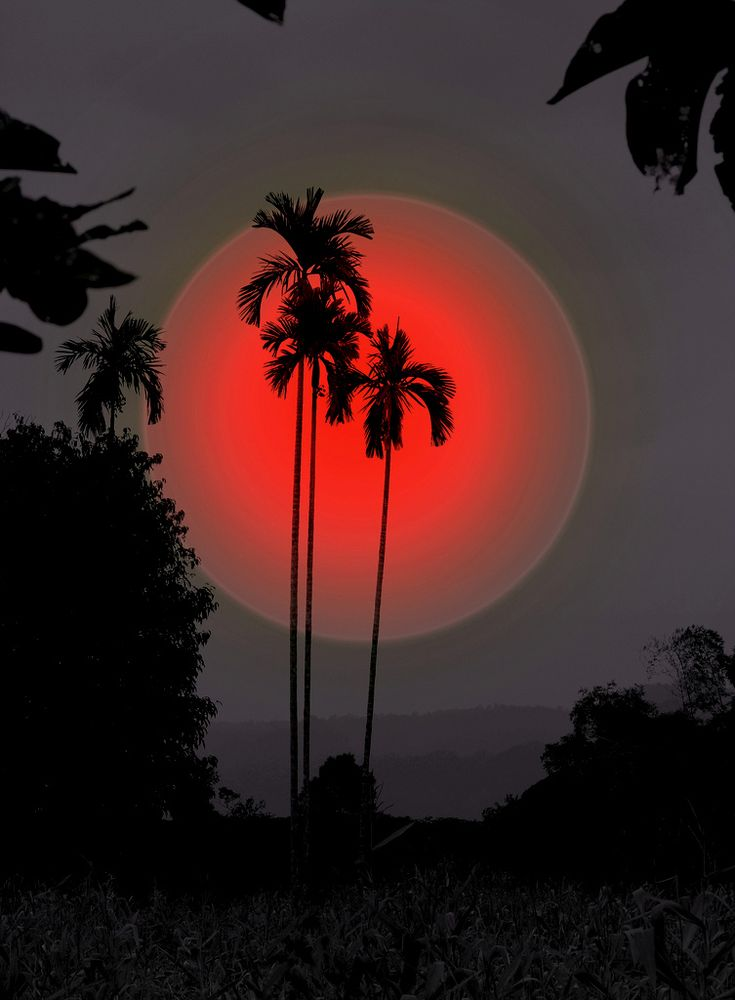 ❖ Amazing Thailand   by Michel v d Linde: Bali, Red Moon, Sunsets, Silhouette, Palms Trees, Beautiful, Thailand, Islands, Natural