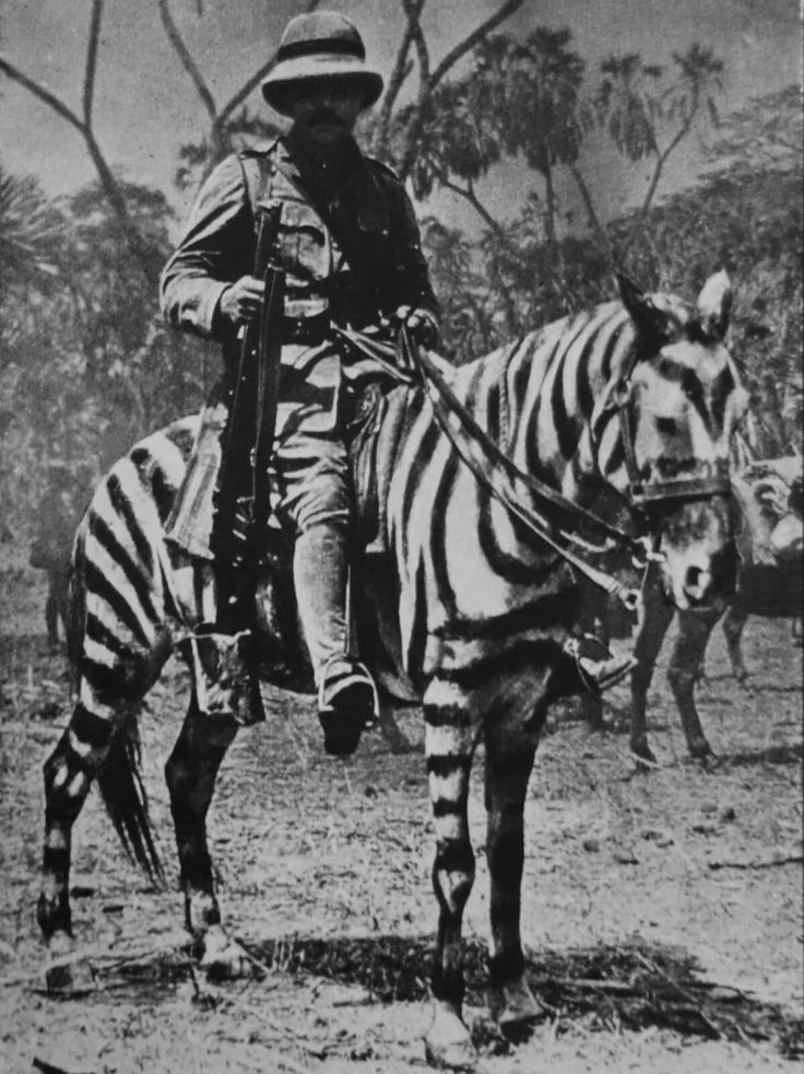 """historicaltimes:  """" British soldier on a horse in zebra camouflage, German East Africa during WWI, 1916.  """""""