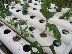The DIYNetwork.com gardening experts demonstrate how to build your own soil-less hydroponic system so that you can grow plants year-round.