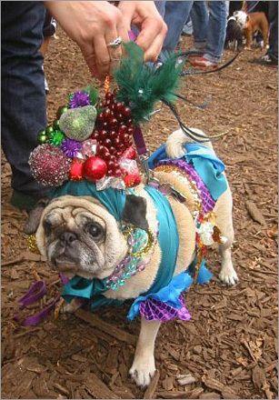 Ms. Ping the pug as famed Portuguese samba singer Carmen Miranda.