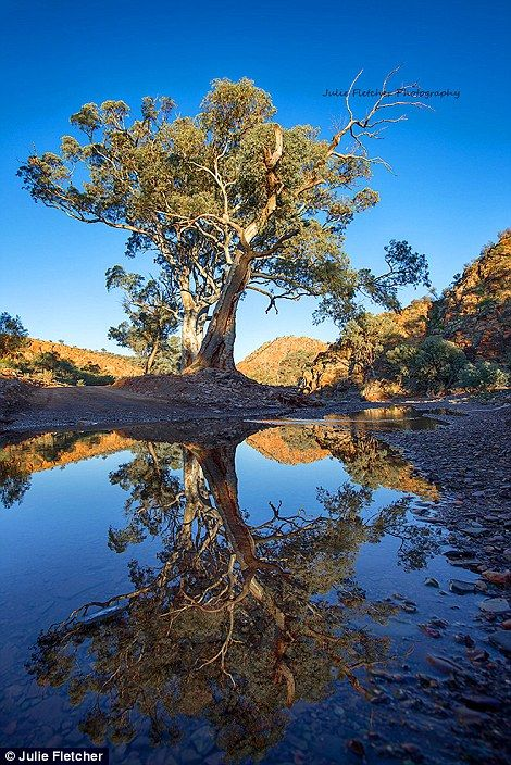 Fletcher has an incredible signature style, as seen in River Gum snapped in Brachina Gorge in the Flinders Ranges of South Australia