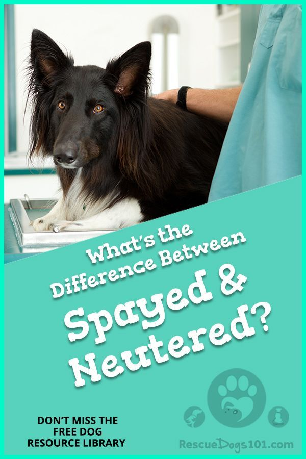 9f21f1df3889fef33a0085b9e255a619 - How Much Does It Cost To Get Your Pet Spayed