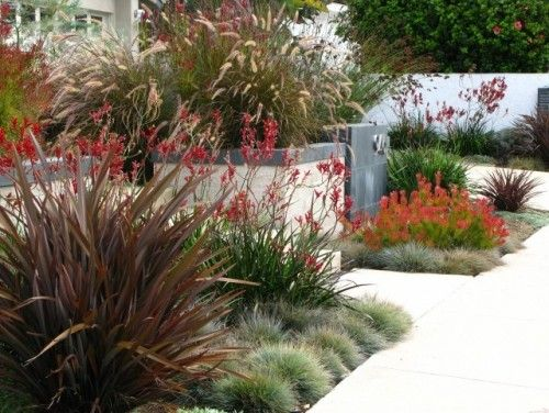 grasses!  Red flax  blue fescue
