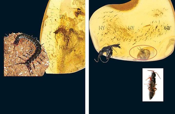 Çıyan http://dusuneninsanlaricin.com/evrimi-yikan-33-amber-fosili/