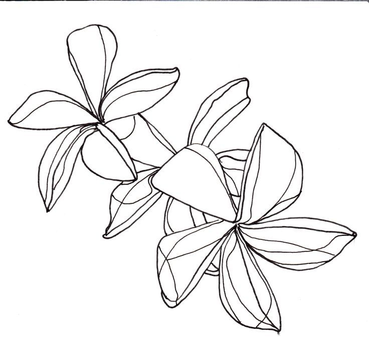 Passion Flower Line Drawing : Beautiful flower line drawings ideas on pinterest