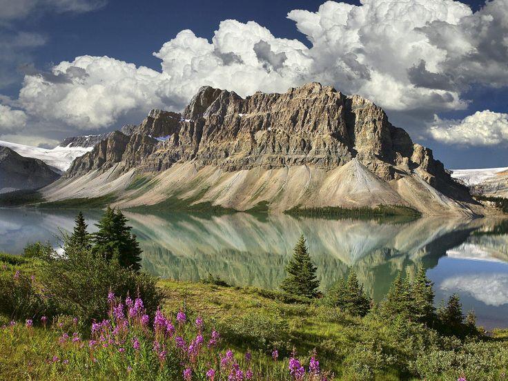Bow Lake Bouquet Canadian Rockies Alberta Canada