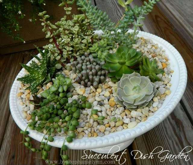 I made a succulent Dish Garden too and I love it.  What I like about this post is the unusual succulents used and that they are all labeled.