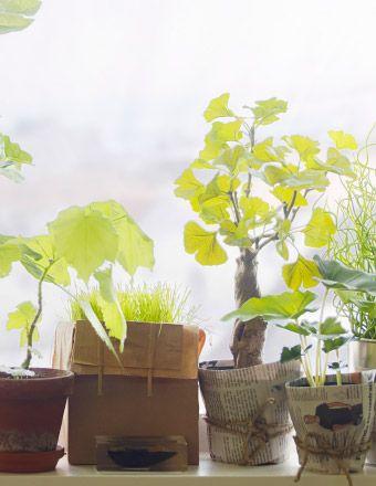 Plantas no parapeito da janela. Dois vasos reaproveitados, feitos de jornal e corda.