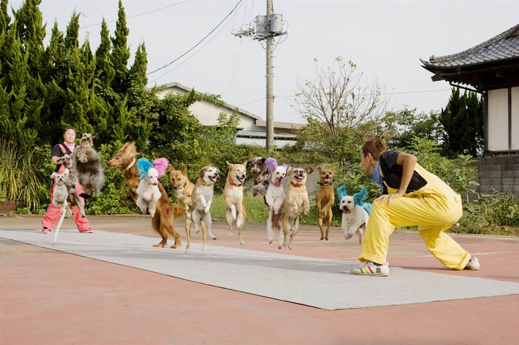 Who knew dogs could skip rope -- much less 13 of them at the same time