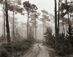 Road & Fog-Ansel Adams
