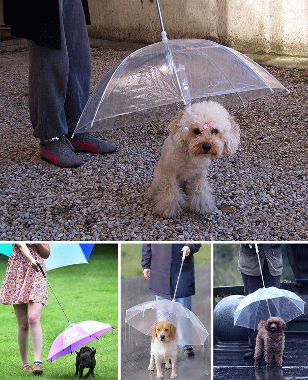 20 idees de cadeaux originaux pour chien parapluie   20 idées de cadeaux originaux pour chien   terrasse piscine photo parapluie niche mobil...