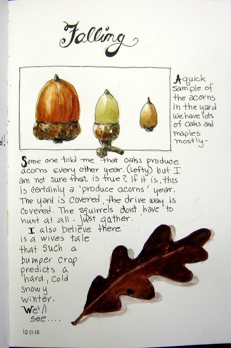 From the nature journals of Sandra Rice ~ Sketching in Nature http://naturesketchers.blogspot.com/