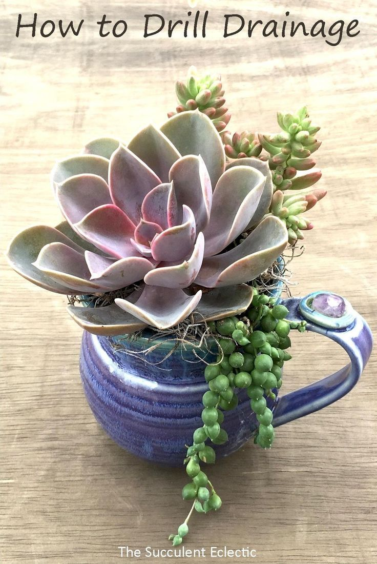 Planting Succulents In Containers Without Drainage Drill Your Own The Succulent Eclectic In 2020 Succulents In Containers Succulents Planting Succulents