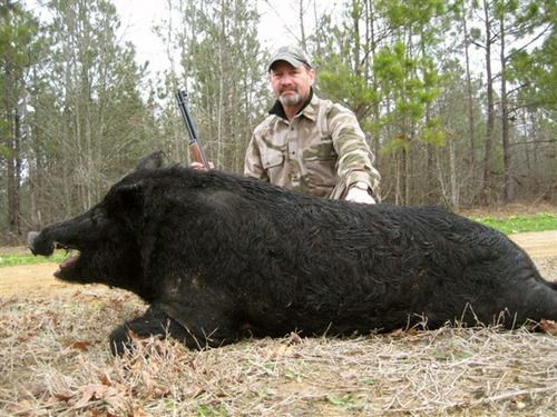Boar Hunting Tips