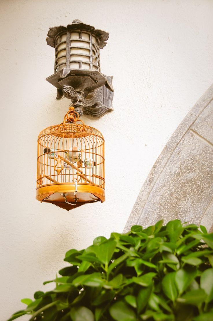 Hong Kong Bird Garden Kowloon