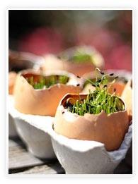 mini jardin dans coquille d'oeufs