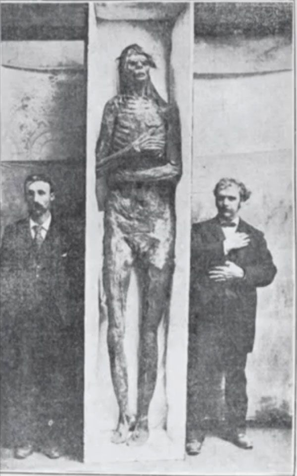 Mummified giant bought by Smithsonian museum