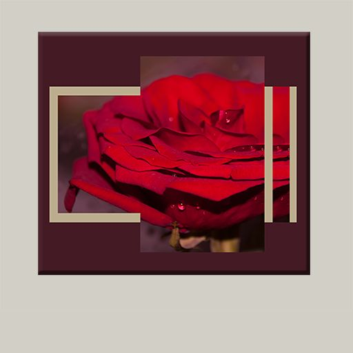 Red rose canvas. #canvas