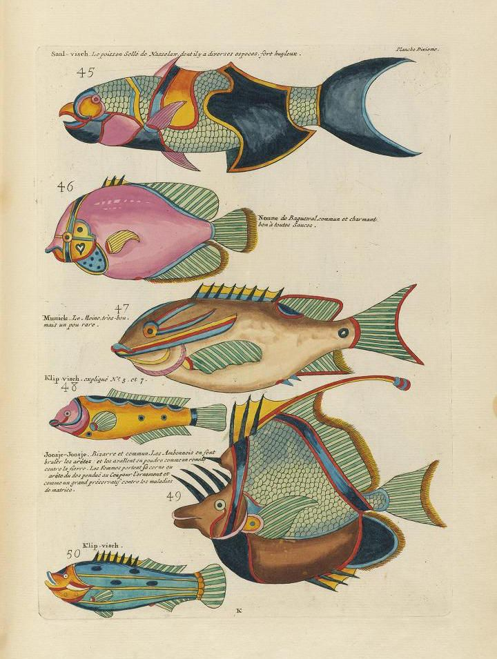 Images From The First Colour Publication On Fish
