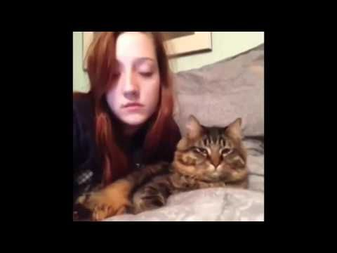 Funny cats try not to laugh