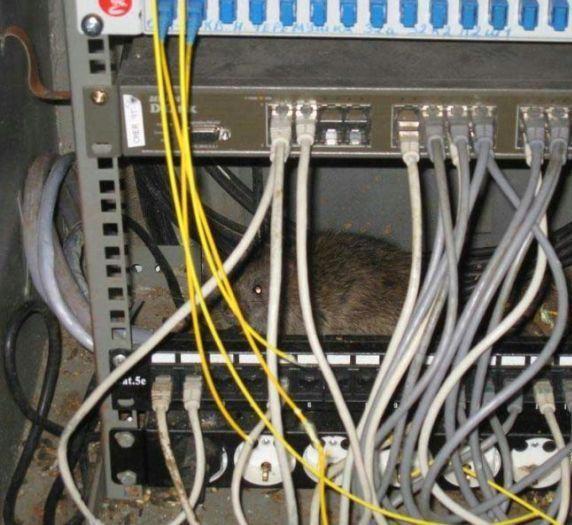 Hoy en día cualquiera se cree un genio de la tecnología, solo porque al resetear su computadora se arregla uno que otro problema, pero hay personas que no merecen perdón por las barbaries que cometen contra sus propios equipos.    Porque en internet se ven rondar imágenes que superan la ficción; desde pescados colgados dentro de un CPU hasta monitores convertidos en jaulas para hamsters o cualquier tipo de roedores. Pero nosotros no entendemos qué pasa por la cabeza de una persona al guardar…