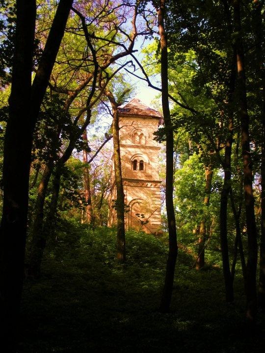 Romantic forest scene, Hungary