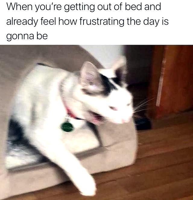 Funny Cat Memes Grumpy Funny Cat Memes Cat Quotes Funny Cat Memes
