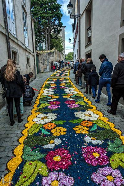 Alfombras Florales del Corpus Christi, en Castropol.2