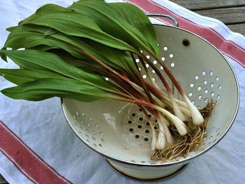 In ultima vreme, leurda a devenit una dintre cele mai apreciate plante ale primaverii. De asemenea, in cultura populara, leurda este asociata