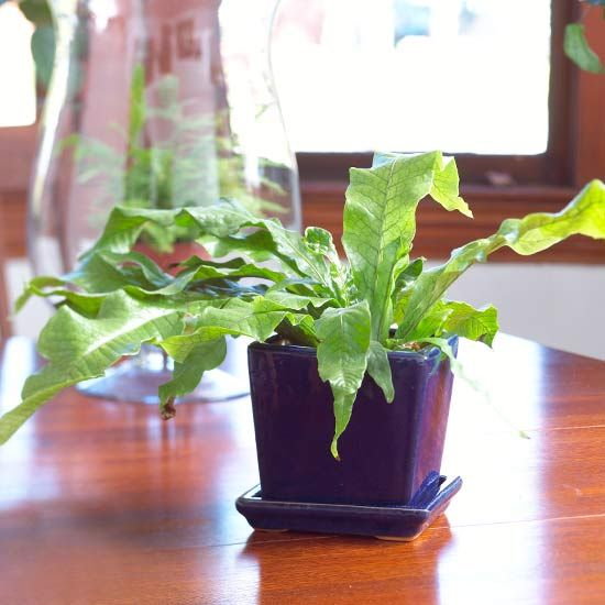 Try these versatile houseplants in your home.