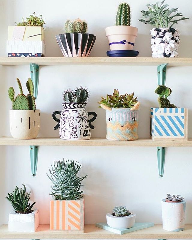 Love me a good cactus display- not to mention the adorable collection of eclectic pots! ❤️ cred Pinterest ➡️ Lizzie Evans #succulents_only #succs #succulents #succulentlove #succulent #succulentjunkie #succulove #succulentaddict #succulentsofinstagram #succulent_obsession #succulentcollection #cactus #cacti #succies #succulentplant #succulentas #succuholic #succulentlover #echeveria #greenthumb #instaplant #instasucculent #justbeingcon #minneapolis #mpls #mn #succulenthoarder #succulentof...