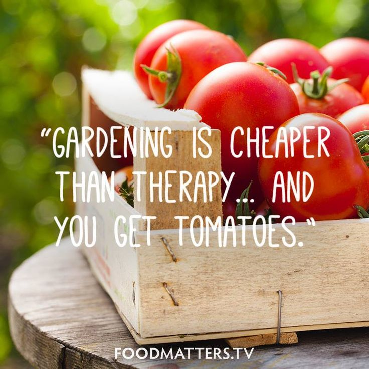 What's in your garden lately? www.foodmatters.com #foodmatters #FMquotes