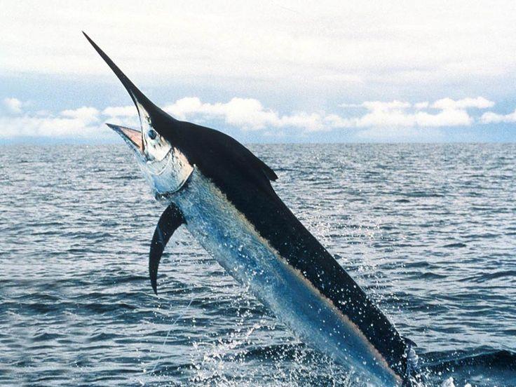 Hindarilah Mengkonsumsi Jenis Ikan Ini