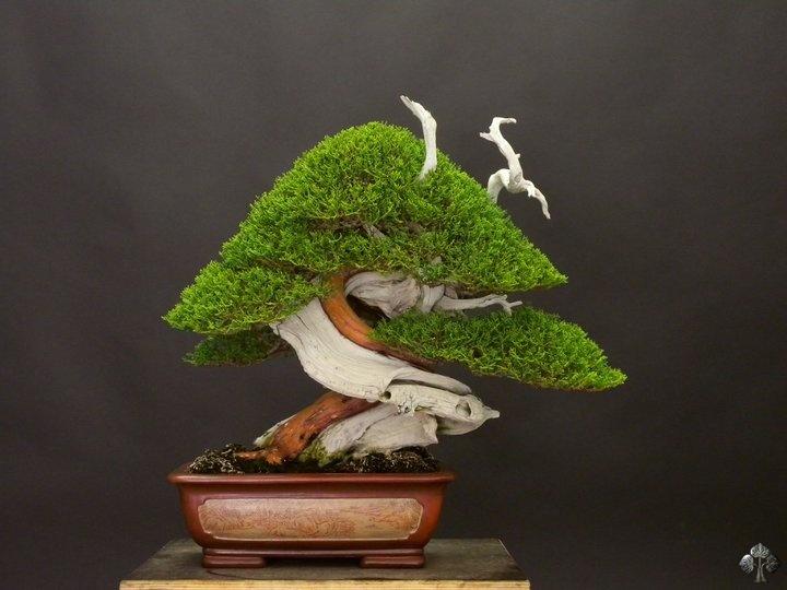56 best Bonsai images on Pinterest | Bonsai trees, Bonsai art and ...