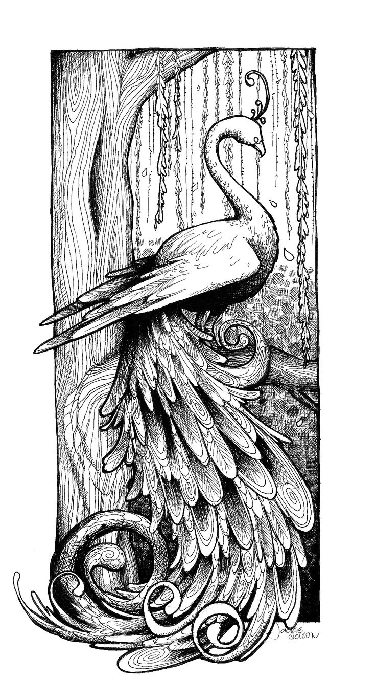 The coloring book project 2nd edition - Peacock Line Drawing