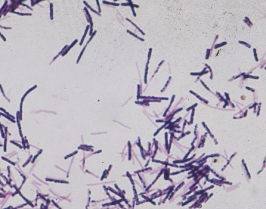 clostridium difficile research Review article from the new england journal of medicine — clostridium difficile infection.