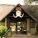 Motswari Private Game Reserve (Timbavati Private Nature Reserve, Sydafrika) - omdömen - TripAdvisor