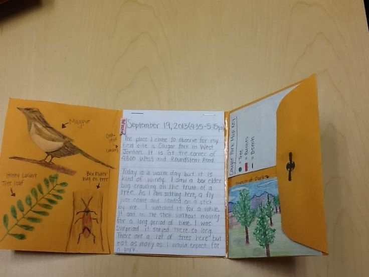 Envelopes and All The Cool Things You Can Do With Them! With Free Interactive Notebook Template!