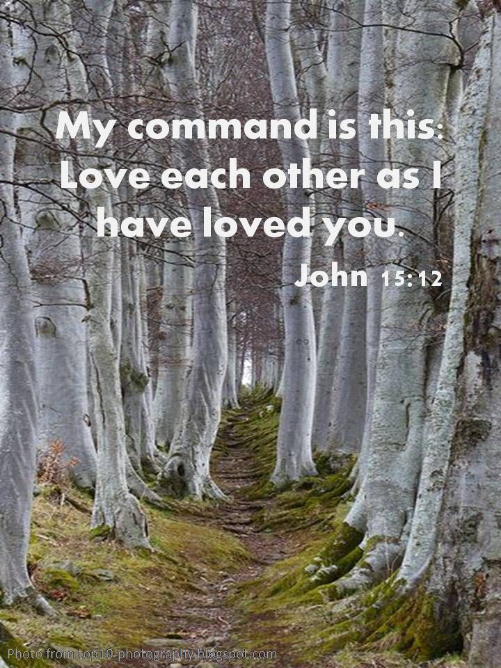Love Each Other As I Have Loved You: Best 25+ John 15 12 Ideas On Pinterest