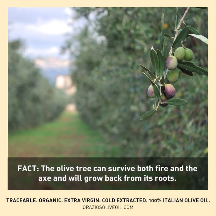 Truly amazing. #oliveoil #olivetrees #evoo #facts #oliveoilfacts
