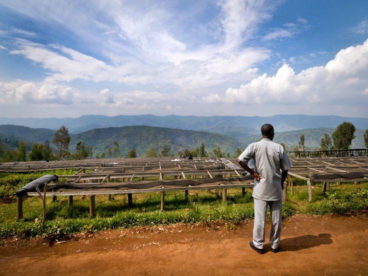 Green Coffee - Rwanda Inzovu Gasabo