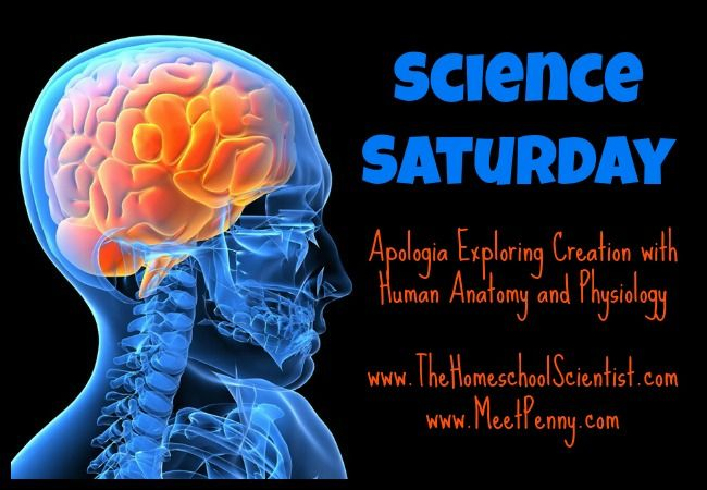 Science Saturday: Apologia Anatomy and  Physiology (Lesson 1)  This site has Powerpoints to go with each lesson.