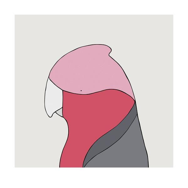 Galah bird - bird art by Australian graphic designers Eggpicnic.