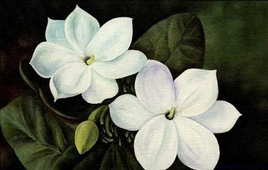 24 best Flower Power images on Pinterest | Flower paintings, Canvas ...