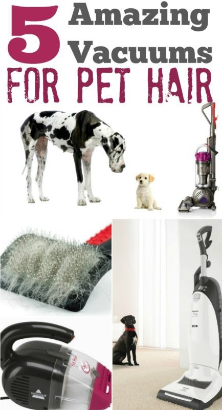 No matter how much you love your pet, you sure don't love the hair they leave behind. It's on the furniture, the carpet, floating in the air and for sure on your clothes!  You clean the floors, vacuuming several times a week, maybe even every day and there's STILL pet hair everywhere! Have you ever thought that perhaps you're using the wrong vacuum?  Read on as eBay shares the five cleaning machines to pick from to rid your home of pet hair.