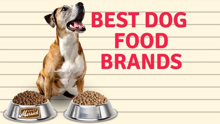 Best Dog Food Brands | Which the Best Healthy Dog Food brands???