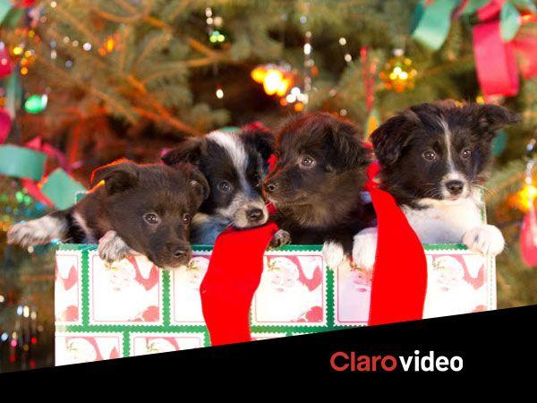 Aunque hoy no sea el día, ya te estás preguntando ¿puedo abrir los regalos?