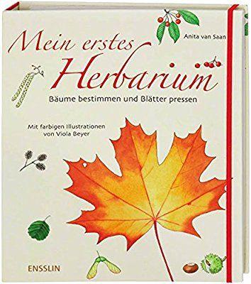 In Vorfreude auf den Frühling: Mein erstes Herbarium - Bäume bestimmen und Blätter pressen